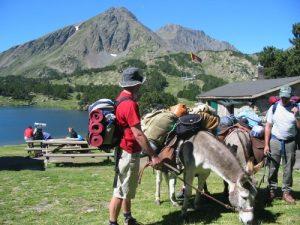 Camping Montagne Blog